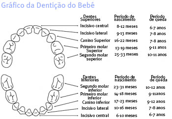 grafico da denticao do bebe